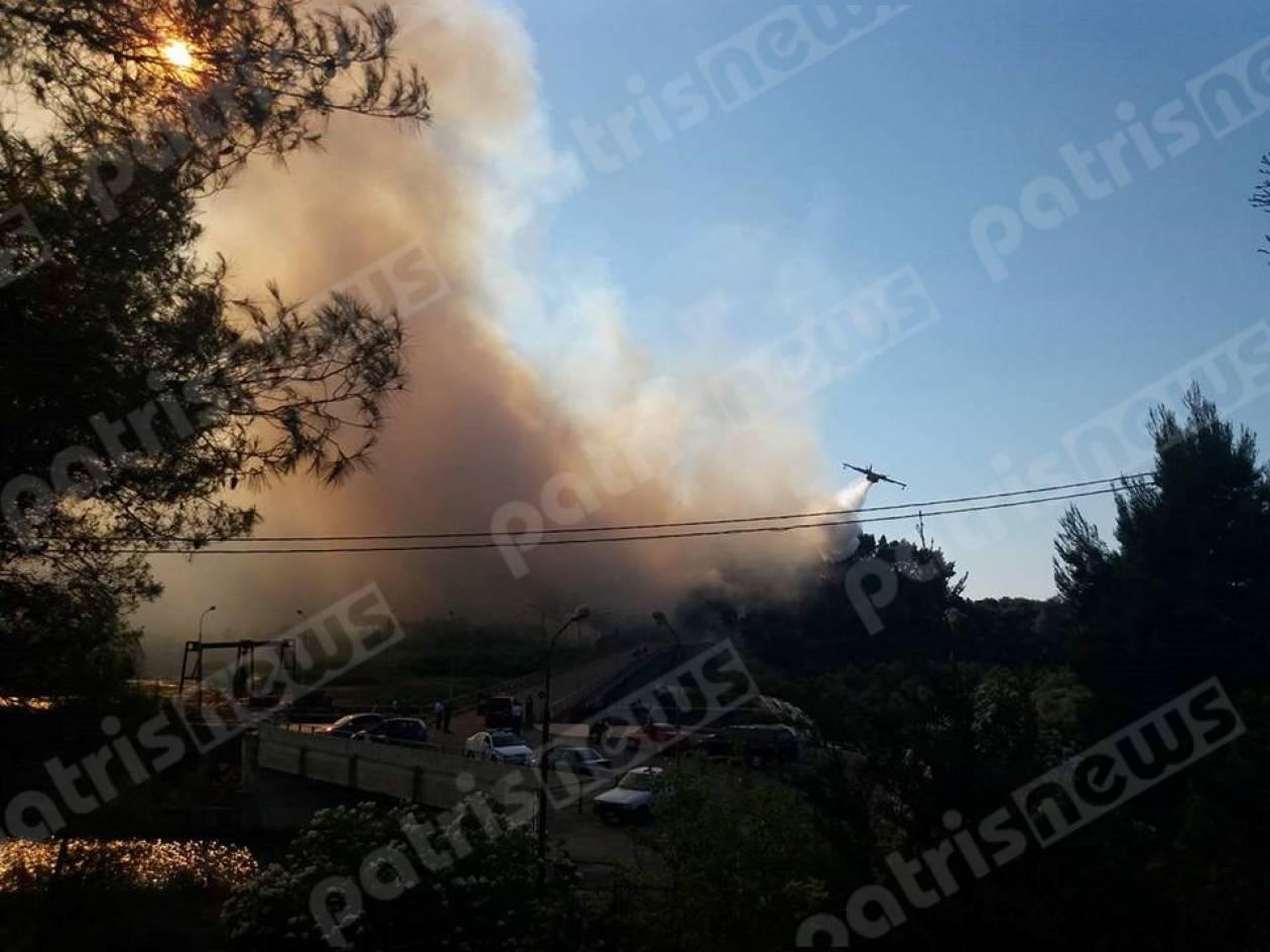 Φωτιά ΤΩΡΑ στο παρθένο δάσος στην Αλφειούσα Ηλείας (pics)