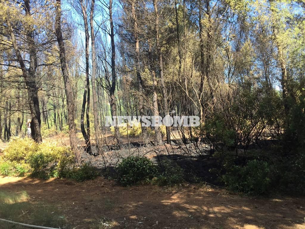 ΦΩΤΙΑ ΤΩΡΑ: Μεγάλη πυρκαγιά μαίνεται στο Κρυονέρι