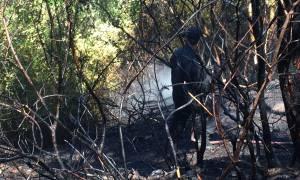 ΦΩΤΙΑ ΤΩΡΑ: Σε ύφεση η πυρκαγιά στο Κρυονέρι