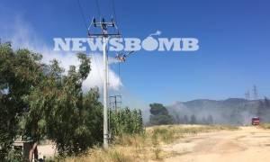 ΦΩΤΙΑ ΤΩΡΑ στο Κρυονέρι: Δείτε τις πρώτες φωτογραφίες από τη μεγάλη πυρκαγιά