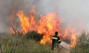 Φωτιά ΤΩΡΑ: Μεγάλη πυρκαγιά κοντά σε σπίτια στην Αρτέμιδα