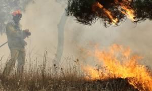 Λάρισα: Υπό έλεγχο τέθηκε η πυρκαγιά στον Τύρναβο