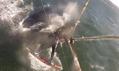 Επικό βίντεο: Έκανε kitesurf και... σκόνταψε πάνω σε μια φάλαινα!