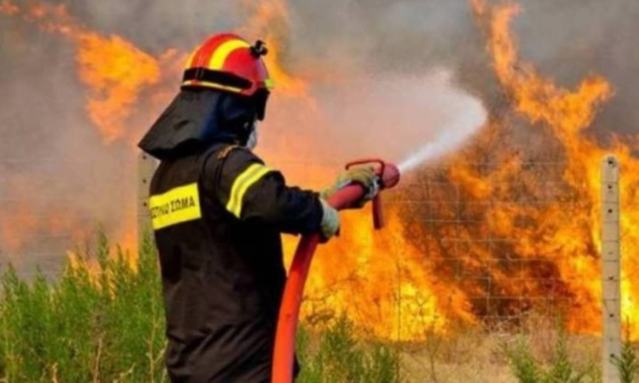 Σαράντα δύο δασικές πυρκαγιές εκδηλώθηκαν μέσα σε ένα 24ωρο