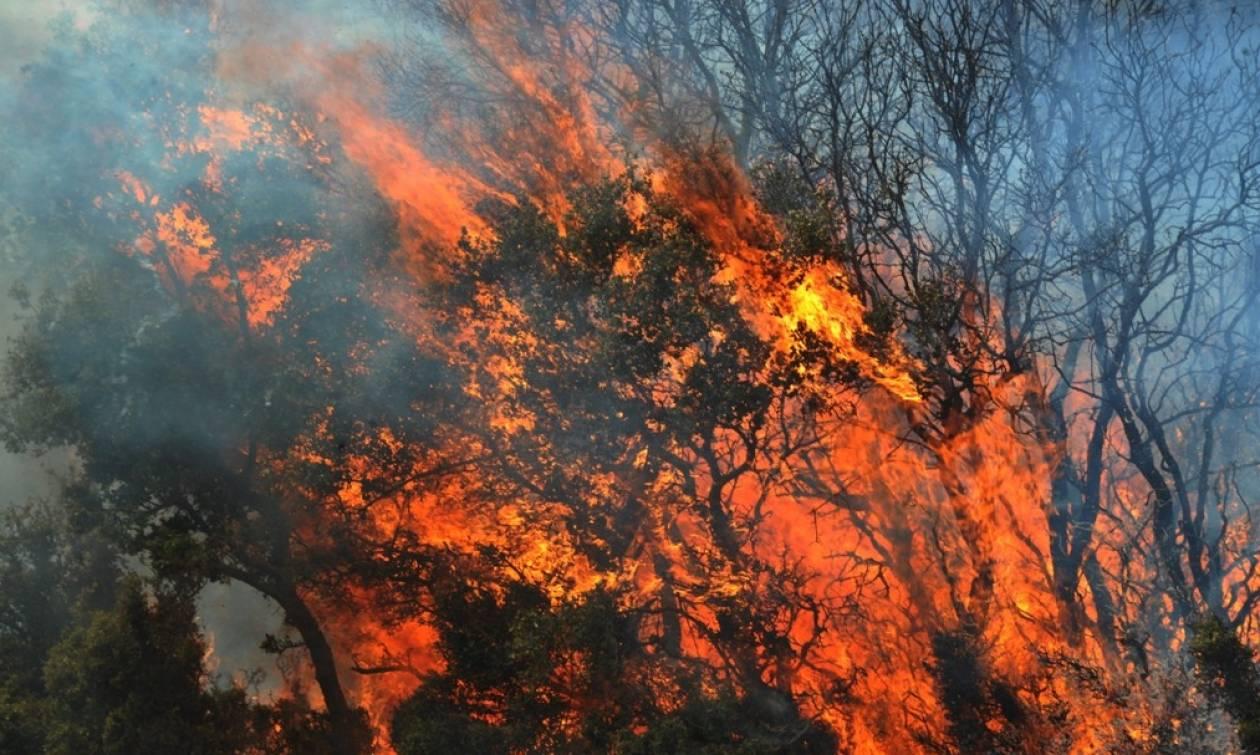Οικολογική καταστροφή από τη φωτιά στη Ζάκυνθο: Στάχτη χιλιάδες στρέμματα δάσους