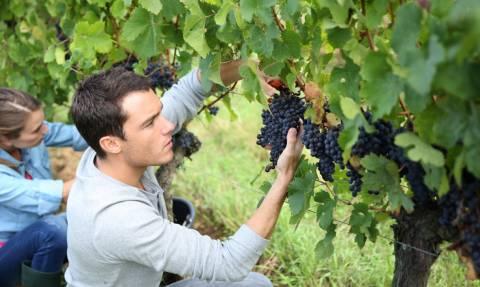 Επιδότηση νέων αγροτών: Δείτε ποιοι θα εισπράξουν 13 εκατ. ευρώ