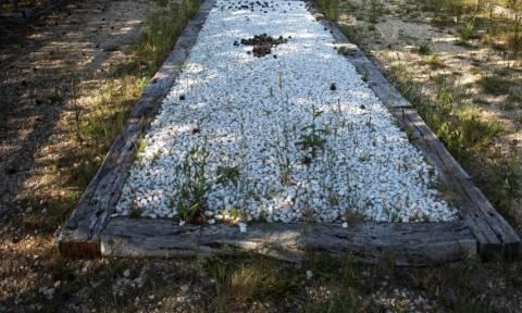 Απίθανη ανακάλυψη: Φυσικά διατηρημένοι εγκέφαλοι σε ομαδικό τάφο από τον ισπανικό εμφύλιο! (pics)