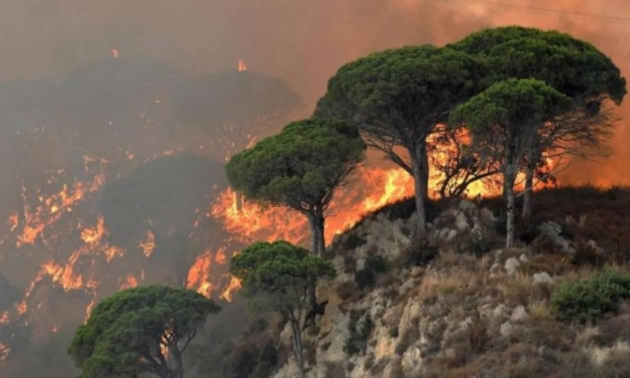 Σε πύρινο κλοιό η Νότια Ιταλία - Κινητοποιείται ο στρατός (pics)