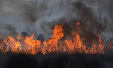 Κρήτη: Φωτιά ΤΩΡΑ στο Σφηνάρι Κισσάμου