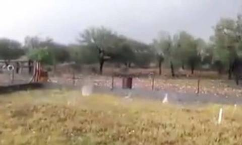 Απίστευτη κακοκαιρία στην Ισπανία: Το χαλάζι σκότωσε πρόβατα! (vid)