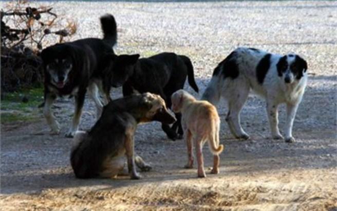 σκυλακι 2