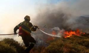 Υπό μερικό έλεγχο η πυρκαγιά στη Σαμοθράκη
