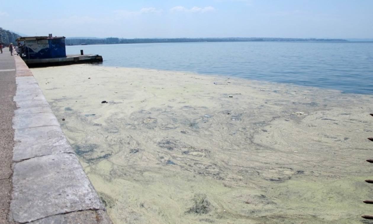 Θεσσαλονίκη: To φυτοπλαγκτόν επέστρεψε στο Θερμαϊκό Κόλπο