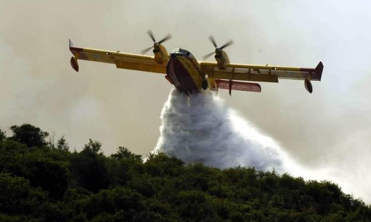 Φωτιά σε δασική έκταση στη Μεσσηνία