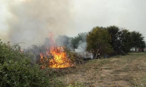 Φωτιά τώρα: Μεγάλη πυρκαγιά στην Γρύλλο Κρεστενών