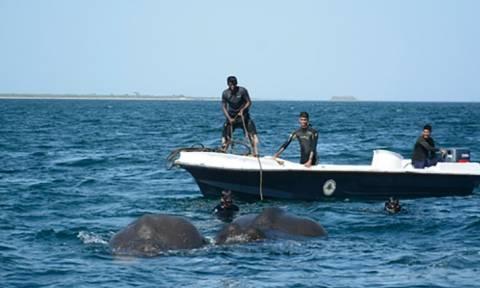 Εντυπωσιακή διάσωση δύο ελεφάντων από τον ωκεανό (vid)