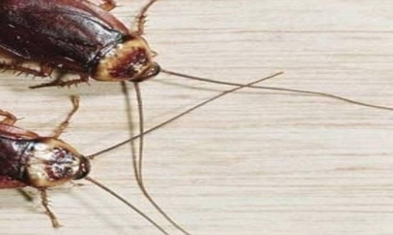 Τα έχετε όλοι στο σπίτι σας και με αυτά θα εξαφανίσετε τις κατσαρίδες...