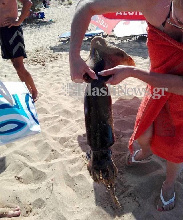 Κρήτη: Δεν πίστευαν στα μάτια τους οι λουόμενοι - Δείτε τι  βγήκε μόνο του στην ακτή! (pics)