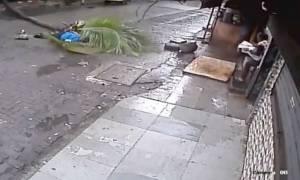 Βίντεο – σοκ: Πασίγνωστη παρουσιάστρια σκοτώνεται από φοίνικα