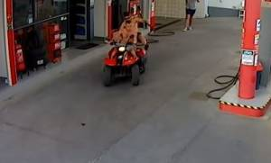 Κρήτη: Γουρούνα φεύγει με «χίλια» από βενζινάδικο – Δείτε τι συμβαίνει στο συνοδηγό (vid)