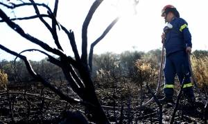 Δασική πυρκαγιά: Πώς να σώσετε τα σπίτια σας (video)