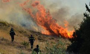 Φωτιά ΤΩΡΑ: Πυρκαγιά στον Μύρτο Ιεράπετρας