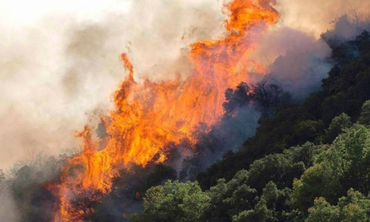 Φωτιά τώρα: Πύρινος εφιάλτης στη Ζάκυνθο κοντά στο «Ναυάγιο»