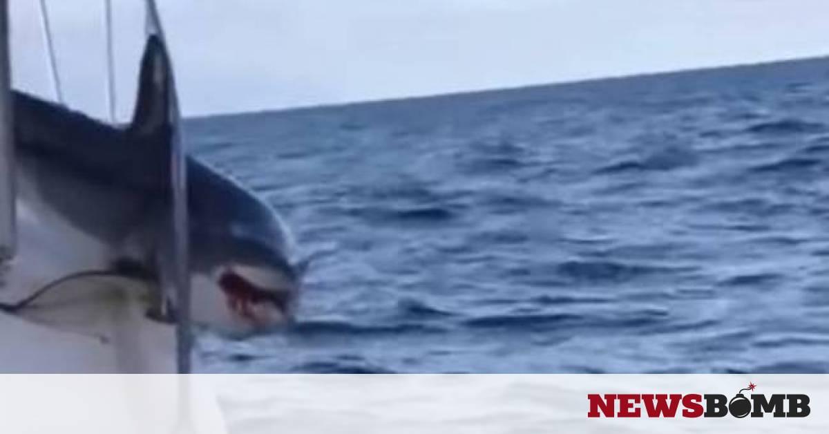 b3656c2b46f Τρομακτικό βίντεο: Καρχαρίας πήδηξε σε σκάφος και παγιδεύτηκε! - Newsbomb