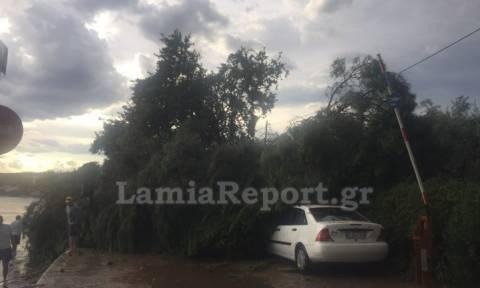 Καιρός: Εικόνες καταστροφής στη Φθιώτιδα από ισχυρό μπουρίνι και χαλάζι (photos & vid)