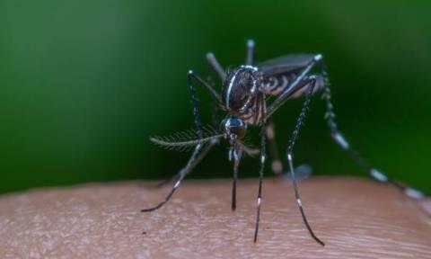 «Συναγερμός» στη Θήβα: Σε καραντίνα τέσσερα χωριά μετά από κρούσμα ελονοσίας