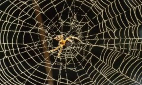Πώς θα διώξετε τις αράχνες μακριά απ' το σπίτι σας χωρίς χρήση χημικών (video)