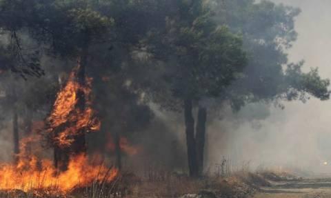 Φωτιά ΤΩΡΑ: Μεγάλη πυρκαγιά στις Κορυσχάδες Ευρυτανίας