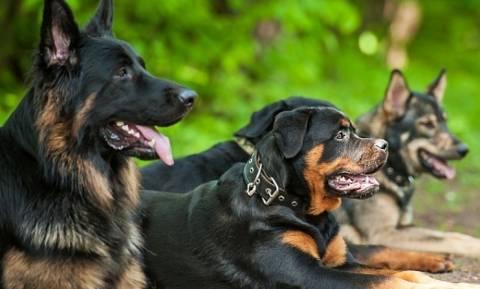 В Греции меняются правила содержания домашних животных