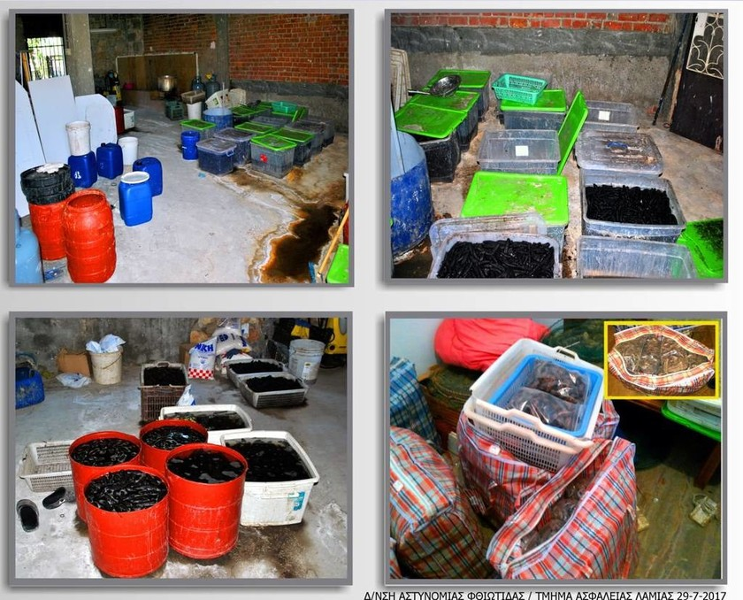 Μαλιακός: Χειροπέδες για παράνομο εμπόριο θαλάσσιων οργανισμών - Κινέζοι κατέστρεφαν τον κόλπο