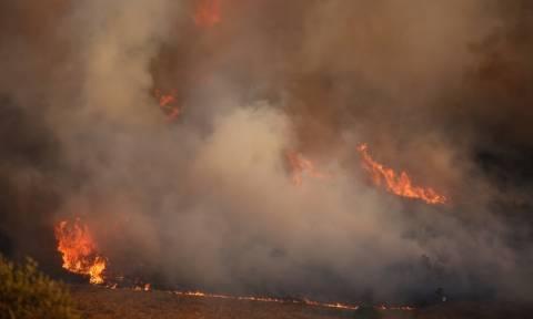 Φωτιά Καλύβια: Μέχρι την παραλία έφτασαν οι φλόγες - Δραματικές ώρες για τους κατοίκους