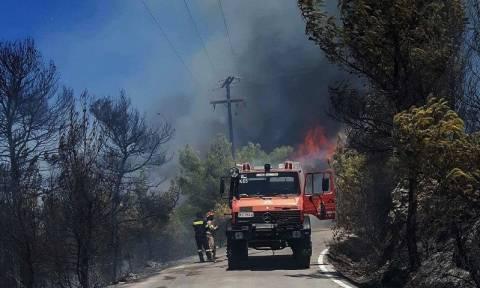 Μεγάλη φωτιά σε δασική περιοχή στη Μυτιλήνη