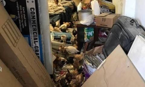 Φρίκη στο Λος Άντζελες: Βασανιστής είχε μετατρέψει βιομηχανική αποθήκη σε κολαστήριο για 2.000 ζώα