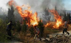 Пожар на Кифире: выгорела треть острова, ситуация вышла из-под контроля