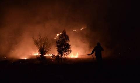 Φωτιά ΤΩΡΑ: Υπό έλεγχο η πυρκαγιά στην Πέρδικα Ηγουμενίτσας