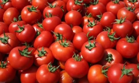 Ντομάτα-γίγας βάρους 1,5 kg σε μποστάνι της Μυτιλήνης! (pics)