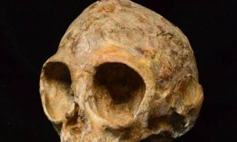 Σπουδαία ανακάλυψη! Βρέθηκε κοινός πρόγονος ανθρώπων και πιθήκων 13 εκατομμυρίων ετών!