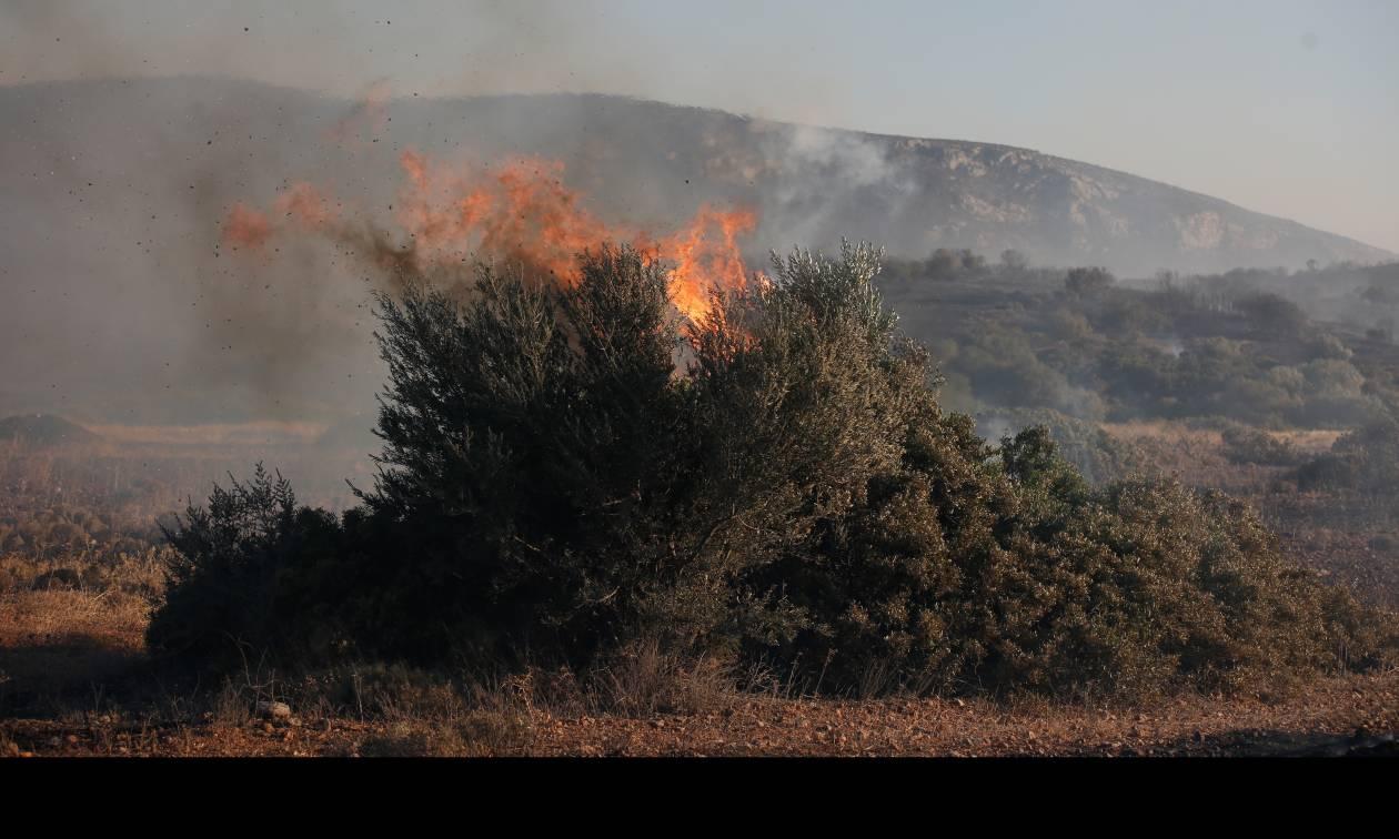Φωτιά ΤΩΡΑ: Σε ύφεση η πυρκαγιά στα Φάρσαλα