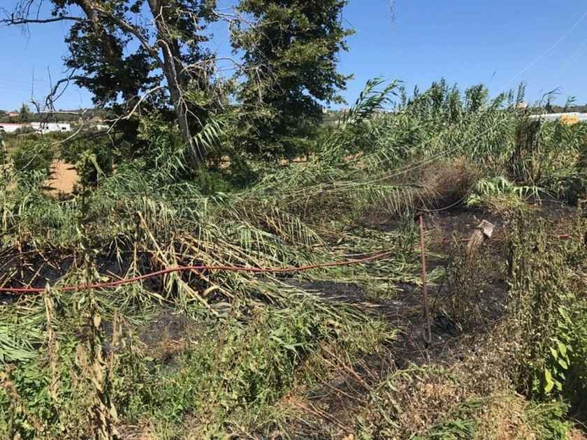 Χανιά: Φωτιά στο Βαμβακόπουλο από σπασμένο ηλεκτροφόρο καλώδιο (pics)