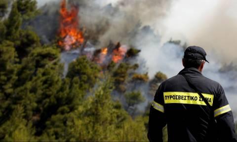 Φωτιά ΤΩΡΑ: Μεγάλη πυρκαγιά μαίνεται στην Καβάλα