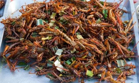 Τρόφιμα από έντομα θα διατίθενται στα σουπερμάρκετ της Ελβετίας!