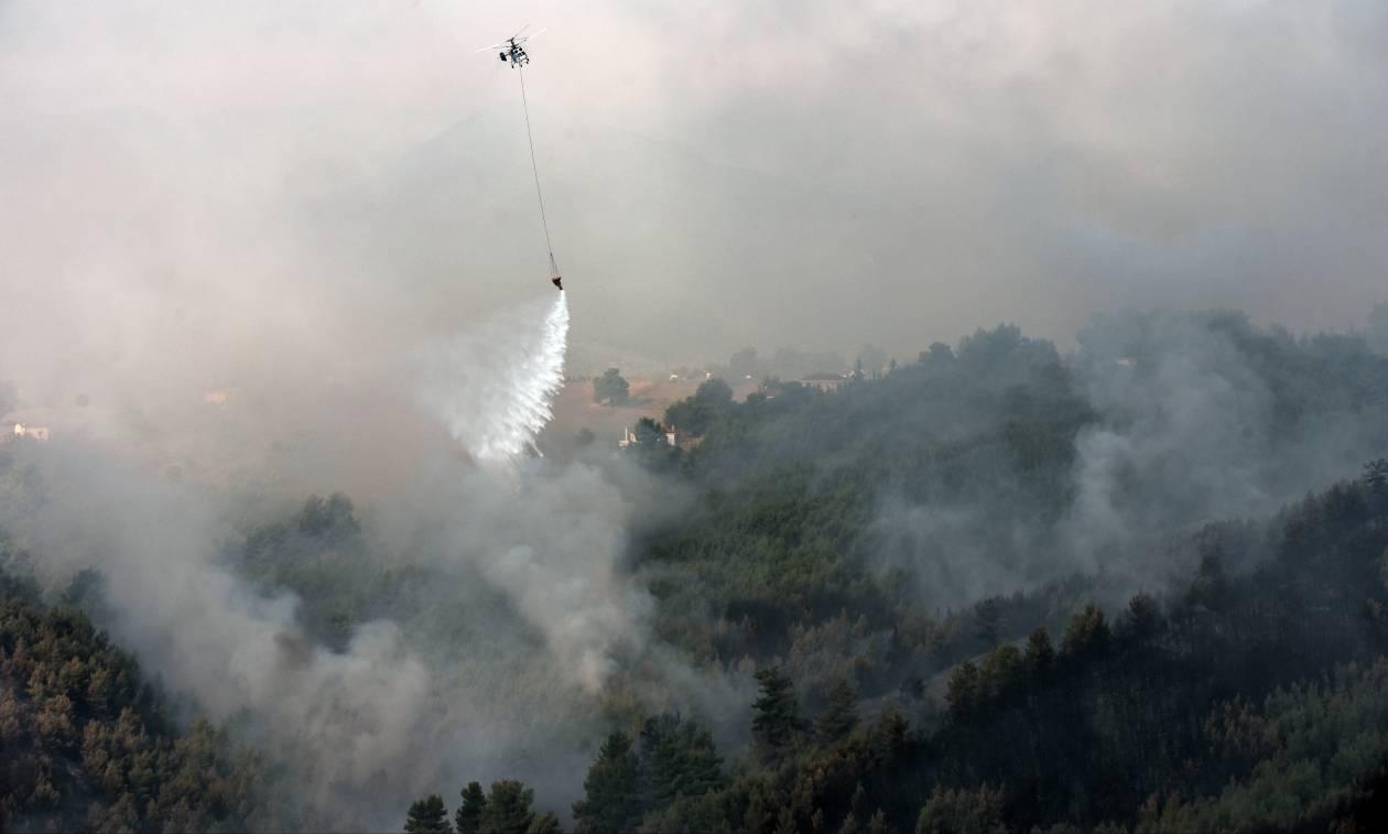 Η Αττική φλέγεται - Πύρινος όλεθρος στο Καπανδρίτι -  Η φωτιά δεν αφήνει τίποτα όρθιο