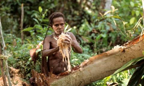 Οι κανίβαλοι της Ινδονησίας: Ζουν πάνω σε δένδρα και τρώνε ανθρώπινη σάρκα