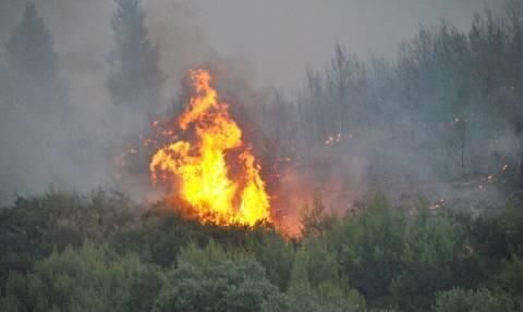 Φωτιά ΤΩΡΑ: Πυρκαγιά στην Κυπαρισσία