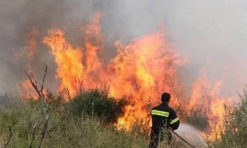 Συναγερμός: Μεγάλη φωτιά ΤΩΡΑ κοντά σε σπίτια στις Αχαρνές