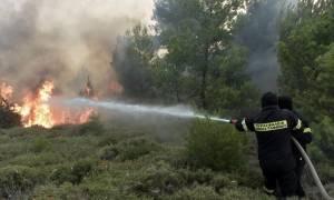 Φωτιά ΤΩΡΑ: Μεγάλη πυρκαγιά στο Ρυτό Κορινθίας